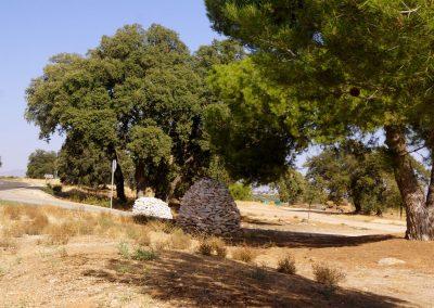 Quercus rotundifolia y Pinus pinea
